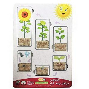 اسباب بازی جورچین (پازل) مراحل رشد گیاه